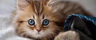 Гречка котам можно ли давать