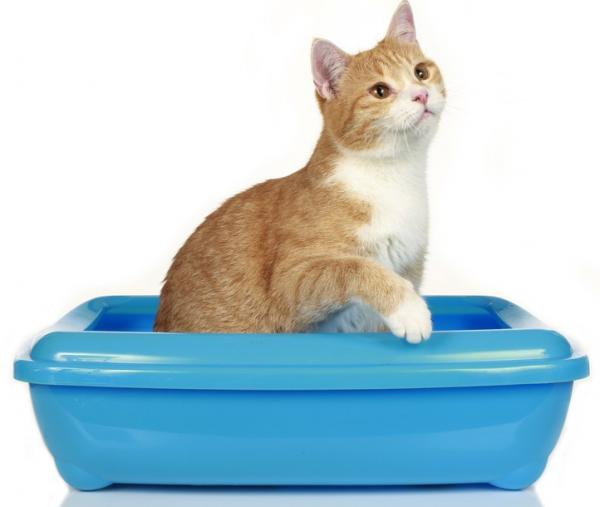 Недержание мочи у кота: причины и лечение, симптомы, медикаментозное и народное лечение