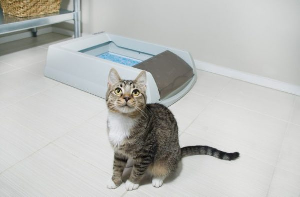 Профилактика недержания мочи у кошки
