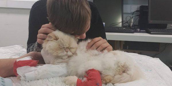 Как понять, что кот умирает