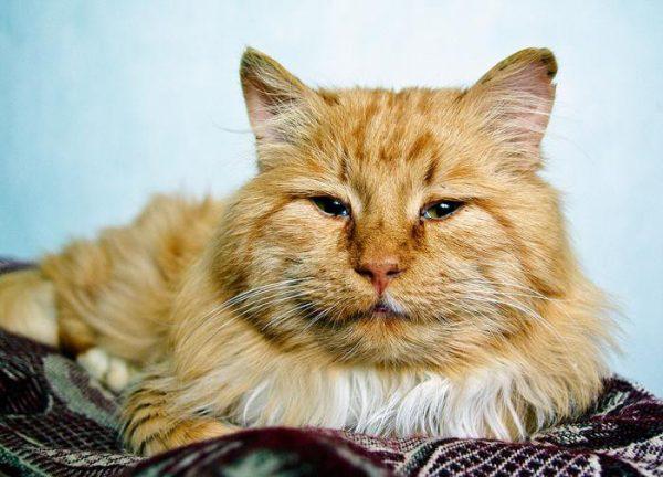 Почему кошки уходят и прячутся перед смертью?
