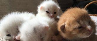 Как умирают кошки: как себя ведут, почему прячутся, что делать, если умер кот