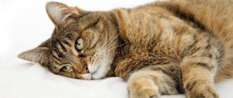 Кот ничего не ест и его рвёт: что делать, рвёт желчью, пьёт только воду