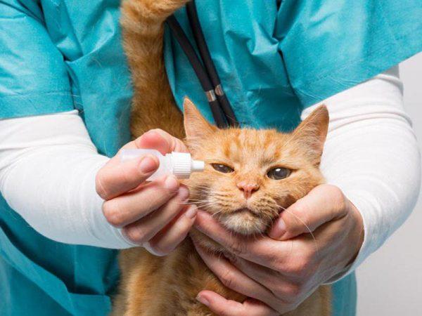 Когда требуется промывание глаз коту?