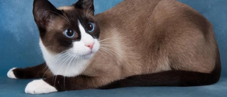 Геморрой у кошек как лечить