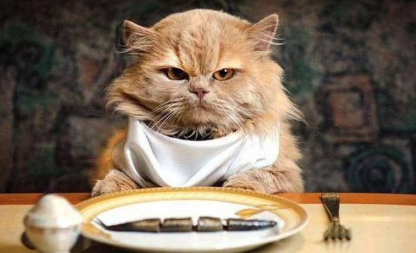 Кошка постоянно просит есть: норма или патология