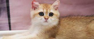 Кошки мочекаменная болезнь симптомы
