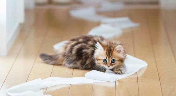 Когда нужно приучать котенка к лотку