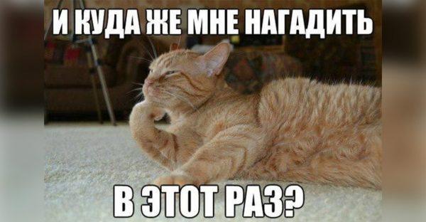 Как отучить котенка гадить в неположенных местах