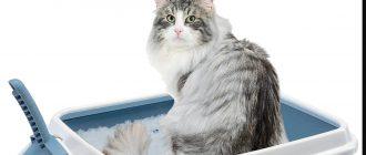 Как отучить кота от сухого корма Вискаса и приучить к нормальной домашней еде