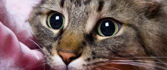 Лечение домашних кошек