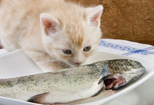 Почему кошкам нельзя рыбу