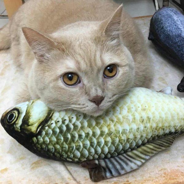 Какой вред может нанести рыба кошке