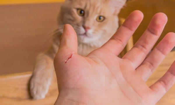 Чем опасен укус кошки для человека