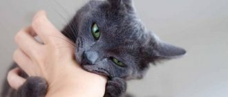 Как узнать чем болеет кошка