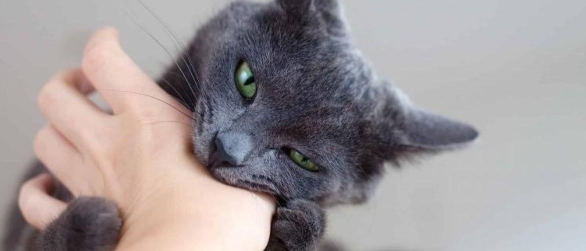 После укуса кошки опухла рука что делать