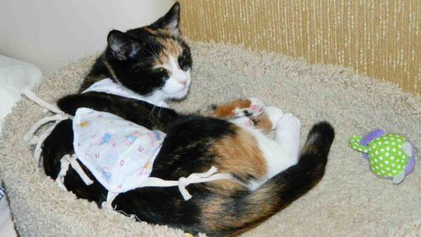 С какой целью проводят стерилизацию кошкам?