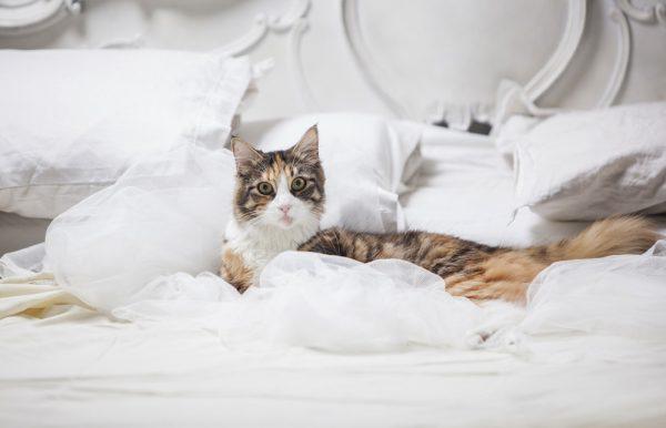 Почему кошка гадит на кровать: основные причины