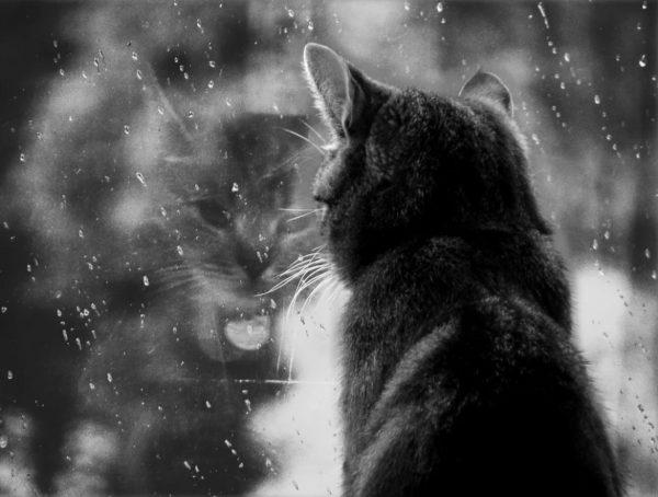 5 причин почему коты уходят умирать из дома