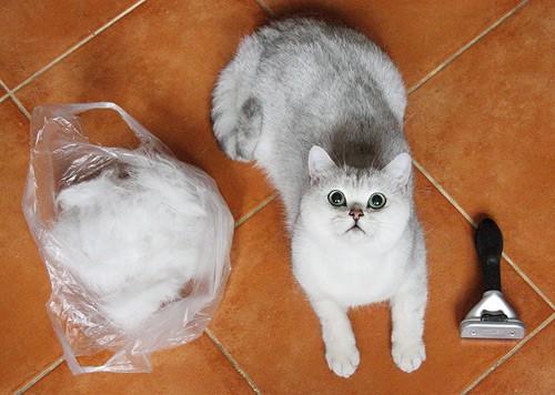 Почему кошку рвет шерстью: норма или патология