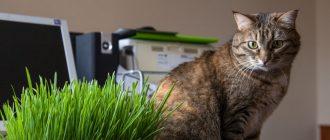 Как сделать массаж кошке при запоре