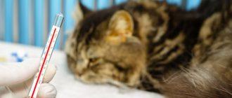 Укус кошки лечение в домашних условиях. Укусил кот опухла рука что делать.