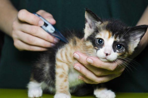 Как сбить температуру у кота в домашних условиях медикаментозными препаратами и народными средствами