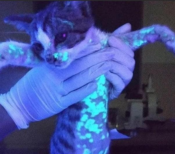 Диагностика микозов с помощью лампы Вуда