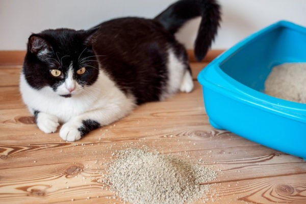 Причины черного кала у кошек