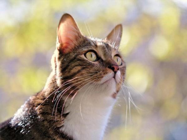 О чем может говорить черный кал у кошек?