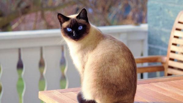 Опасны ли дерматологические болезни кошек для человека
