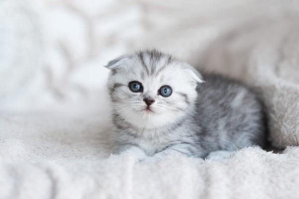 Вес котенка по месяцам в зависимости от породы: таблица, особенности развития