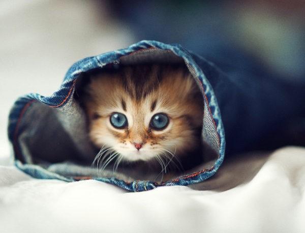 Сколько должен весить котенок с 4 до 6 месяцев