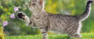 Капли в уши для кошек