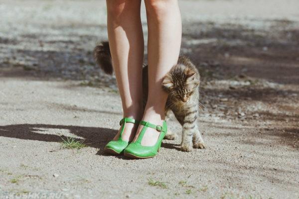 Кошка трется о ноги: отучать или поощрять?