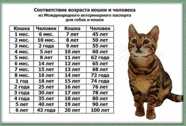 Соотношение возраста кошки и человека: таблица