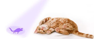 Ультразвук для кошек для улицы: как работает, какой выбрать, где применяют