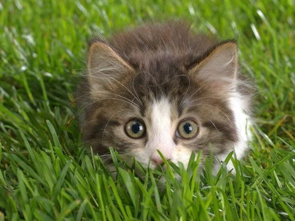 Методы определения кошачьего возраста