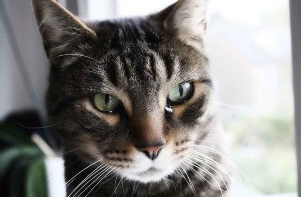 Нормальный цвет мочи у здоровой кошки
