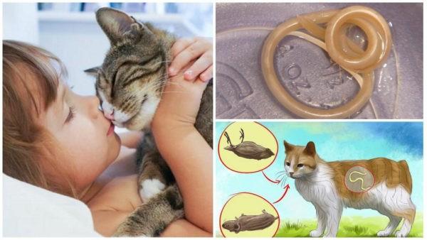 Можно ли заразиться глистами от кошки?