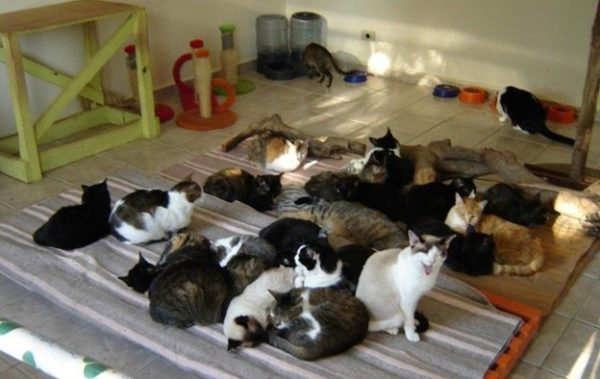 В кошачьем питомнике.