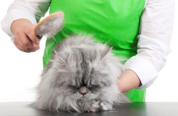 Регулярное вычесывание предотвращает закупорку кишечника комками проглоченной при вылизывании шерсти