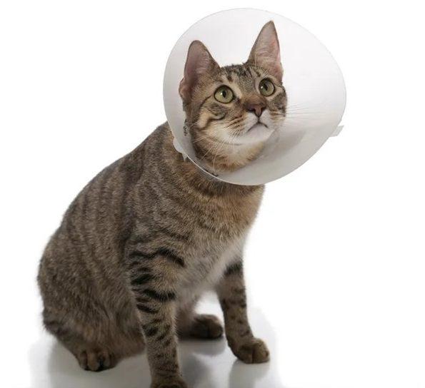 Зачем кошка вылизывает под хвостом до залысин — это может быть опасно!