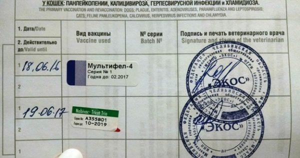 Отметка на страничке ветеринарного паспорта.