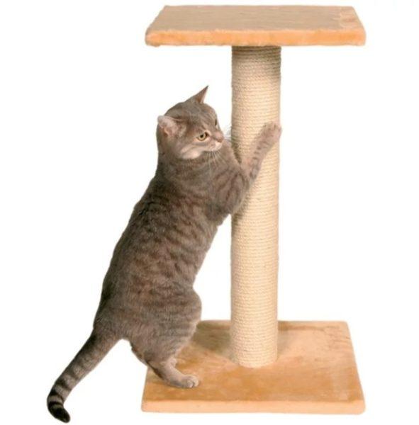Из-за чего у кошек на подушечках передних или задних лап появляются наросты?