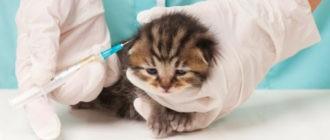 Котенок чихает: причины, что делать