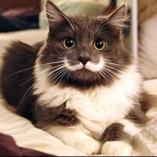 Клички для котов с характером